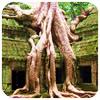 El poder de la natura: els temples d'Angkor a Cambodja